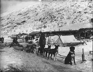 mail sled dog team