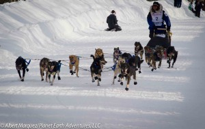 Martin's BuserDogs display an unusual configuration leaving the Willow ReStart, 2013 Iditarod. Photo by Albert Marquez/Planet Earth Adventures, LLC