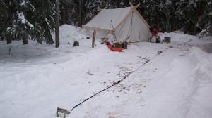 At the Dawson City dog camp. 2008 Yukon Quest, photo by Helen Hegener/Northern Light Media