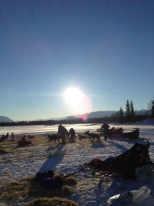Mushers tend their dogs at the Finger Lake checkpoint. Photo by Mandy Dixson, Winterlake Lodge