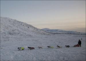 Yukon Quest musher photo by Northern Light Media