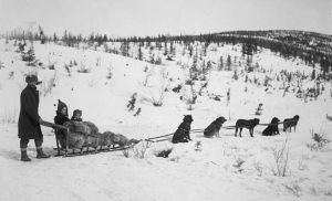 Early Alaskan dog team on the trail.