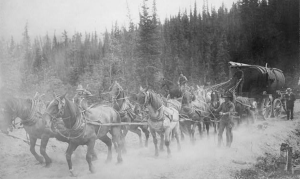 Hauling freight on the Overland Trail between Whitehorse and Dawson City