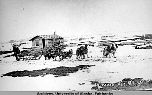 23. Iditarod dog team 1911